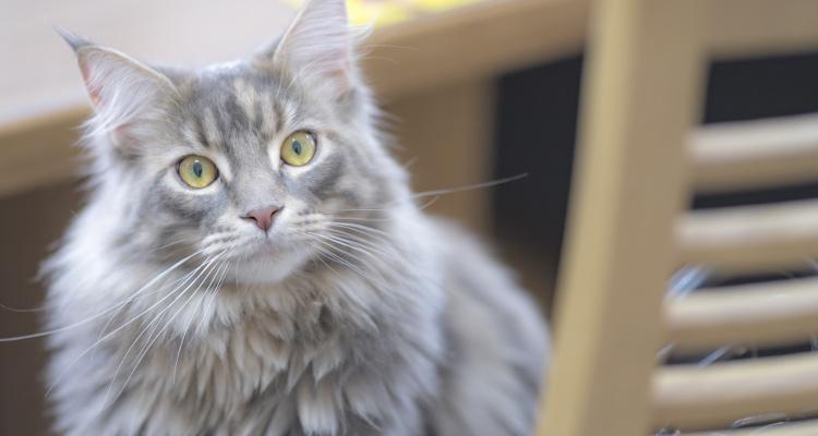 猫のオーナー・動物病院登録