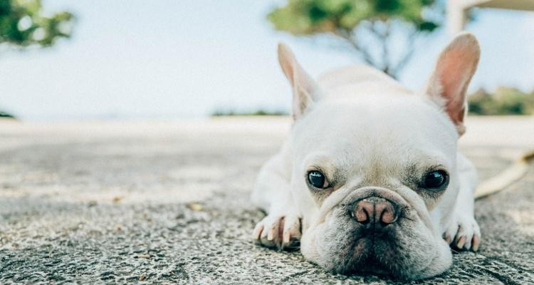犬のオーナー・動物病院登録